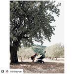 #Repost @minireyve 😍 ・・・ A l'ombre dans le champ des oliviers ! #lesminireyveenvacances  #yoyo #pepin_de_pomme #Pépin_de_pomme #poussettebebe #poussetteyoyo #planchearoulette #planche #strollers #stroller #strollerbaby #strollerbabyzenyoyo #babyzenyoyo #babyzenstrollers #babyzen #summertime #summerbaby #summerbabies #peppermint #lapoussettecompacte #poussettecompacte